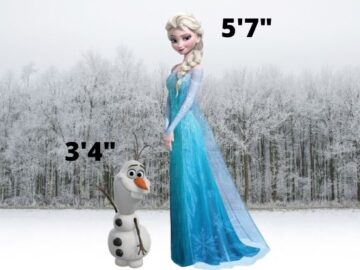 The actual height of OLAF