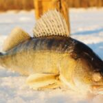 Best Ice Fishing Tips That You Should Know