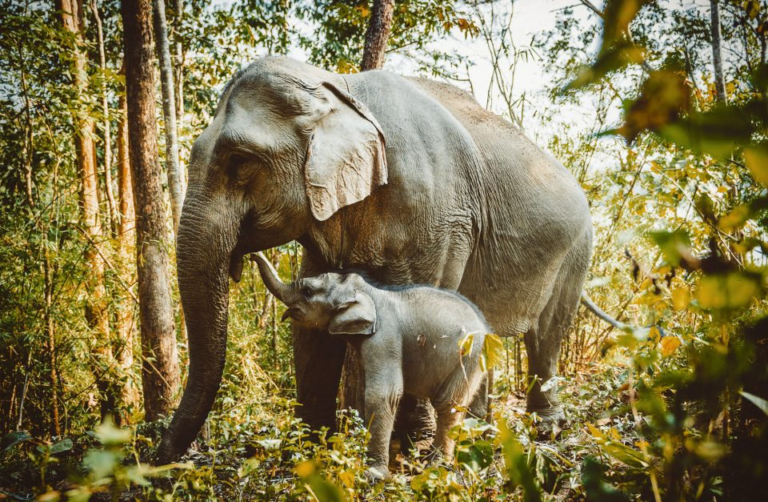 Discover an Elephant Conservation Center in Thailand