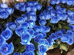 Understanding the Meaning Behind Blue Roses