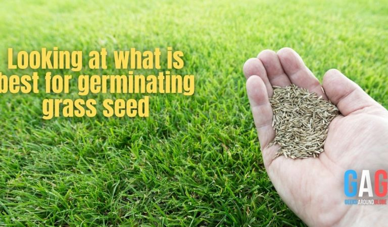 Looking at what is best for germinating grass seed